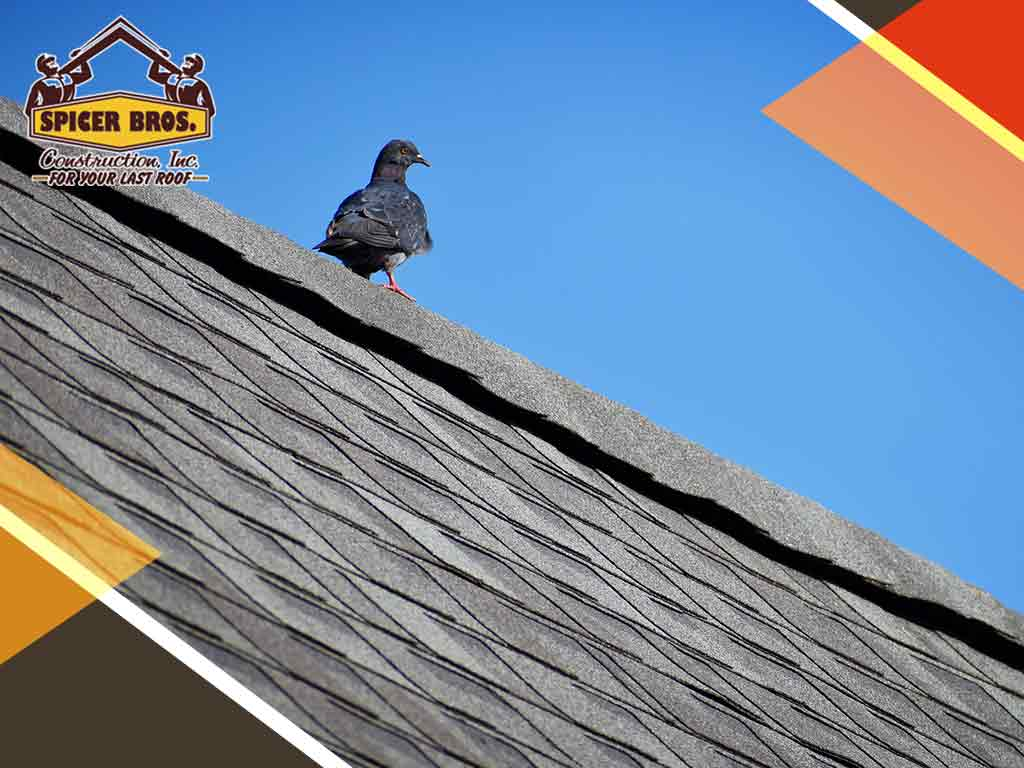 Two Types of Roofing Damage